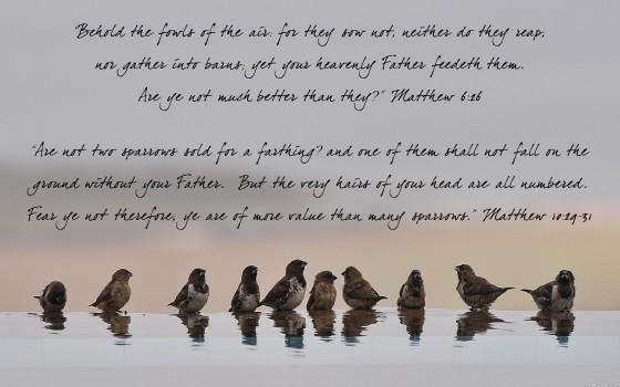 Matthew 6:26 & Matthew 10:29-31